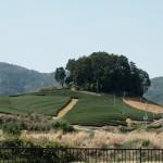和束町 安積親王墓と茶畑