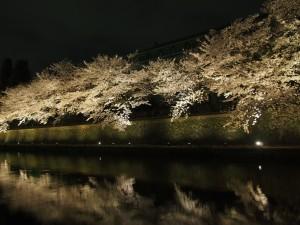 岡崎 桜ライトアップ