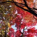 紅葉の時期も気になります 金蔵寺