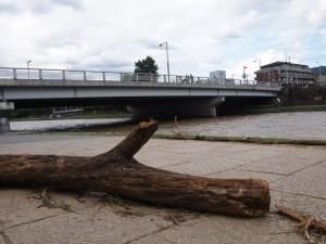 増水で流された流木