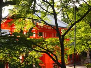 八坂神社 輝く緑と西楼門