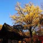 下鴨神社 河合神社 12月3日