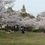 さくら近隣公園 4月1日