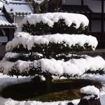 興聖寺の雪景色