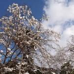 三室戸寺の雪景色