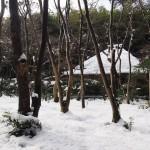 祇王寺の雪景色
