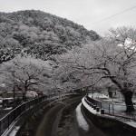 山科疎水 1月