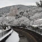 山科疏水の雪景色