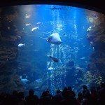 京都水族館 夜間営業 1月
