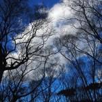 冬の糺の森
