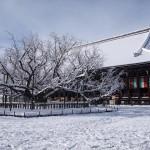 西本願寺 1月