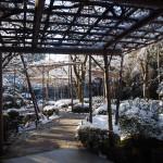 平安神宮の神苑