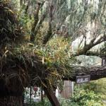 東林院 槇と松