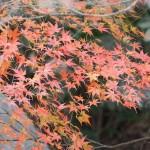 東寺 真冬の紅葉