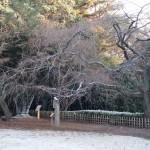 近衛邸跡 雪化粧