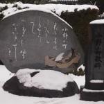 隋心院の雪景色