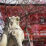 清水寺 仁王門の梅