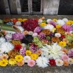 北野天満宮 菊の手水鉢