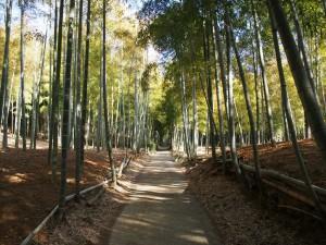 深草の竹林