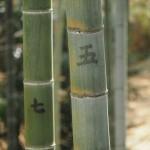 長岡京市の竹林