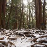 鞍馬山 木の根道 2月