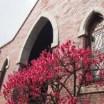 同志社大学 礼拝堂と紅梅