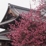 興正寺 2月