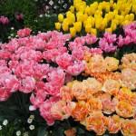 京都府立植物園 早春の草花展 2月