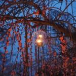 北野天満宮 梅苑ライトアップ