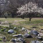 京都御苑 出水の小川