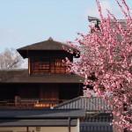 興正寺からの飛雲閣の紅梅