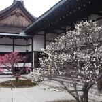 京都御所 3月