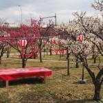 梅小路公園 梅園
