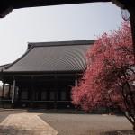 興聖寺 3月