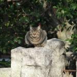 伏見にいた猫