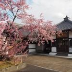 長徳寺 3月