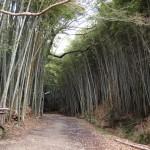 大岩神社の参道