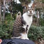 私の背中に乗った猫