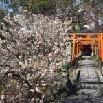 平野神社 桃桜 3月