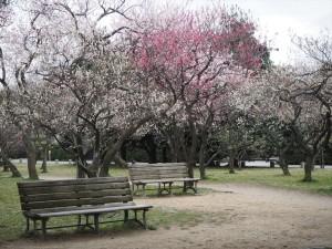 京都御苑 梅林