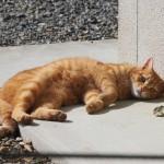日向ぼっこ(?)中の猫