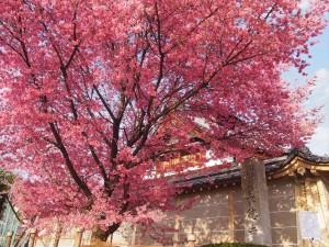 長徳寺 3月20日