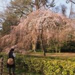 京都御苑 近衛邸跡 3月20日