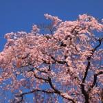 京都市武道センター 3月21日