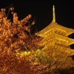 東寺 ライトアップ 3月22日