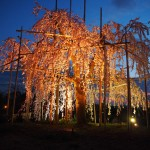 宇治市植物公園 ライトアップ
