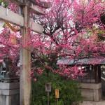 菅大臣神社