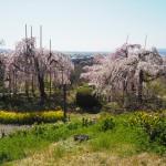 宇治市植物公園