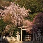 大豊神社 3月25日