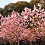 熊野若王子神社 3月25日